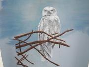 Snow Owl Stare