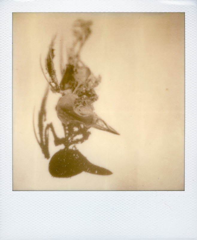 px100...first scatto