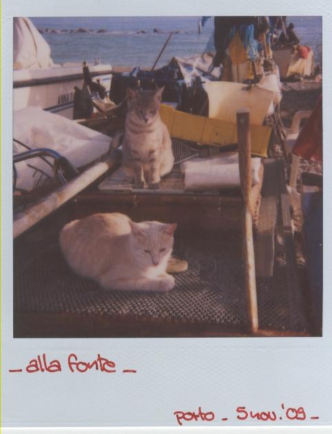fischers katzen