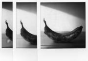 Banana's Trilogy