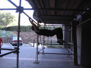albert swinging bar to bar :)