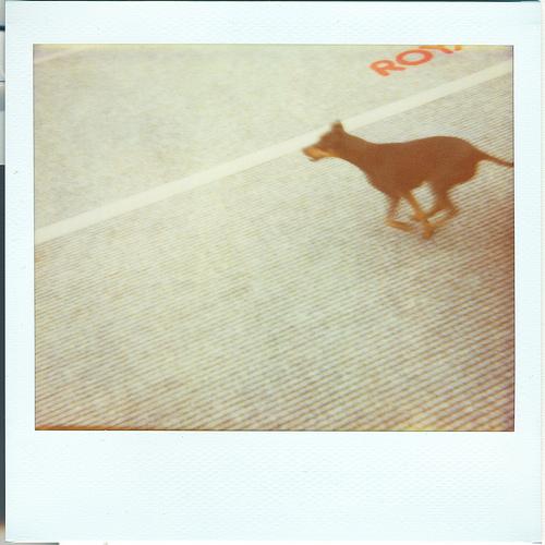 Run Doggy Run!