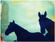 horses 6sixty9
