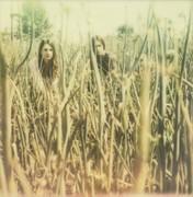 onion fields