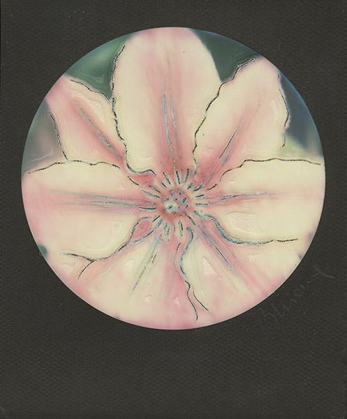 Non è solo un fiore
