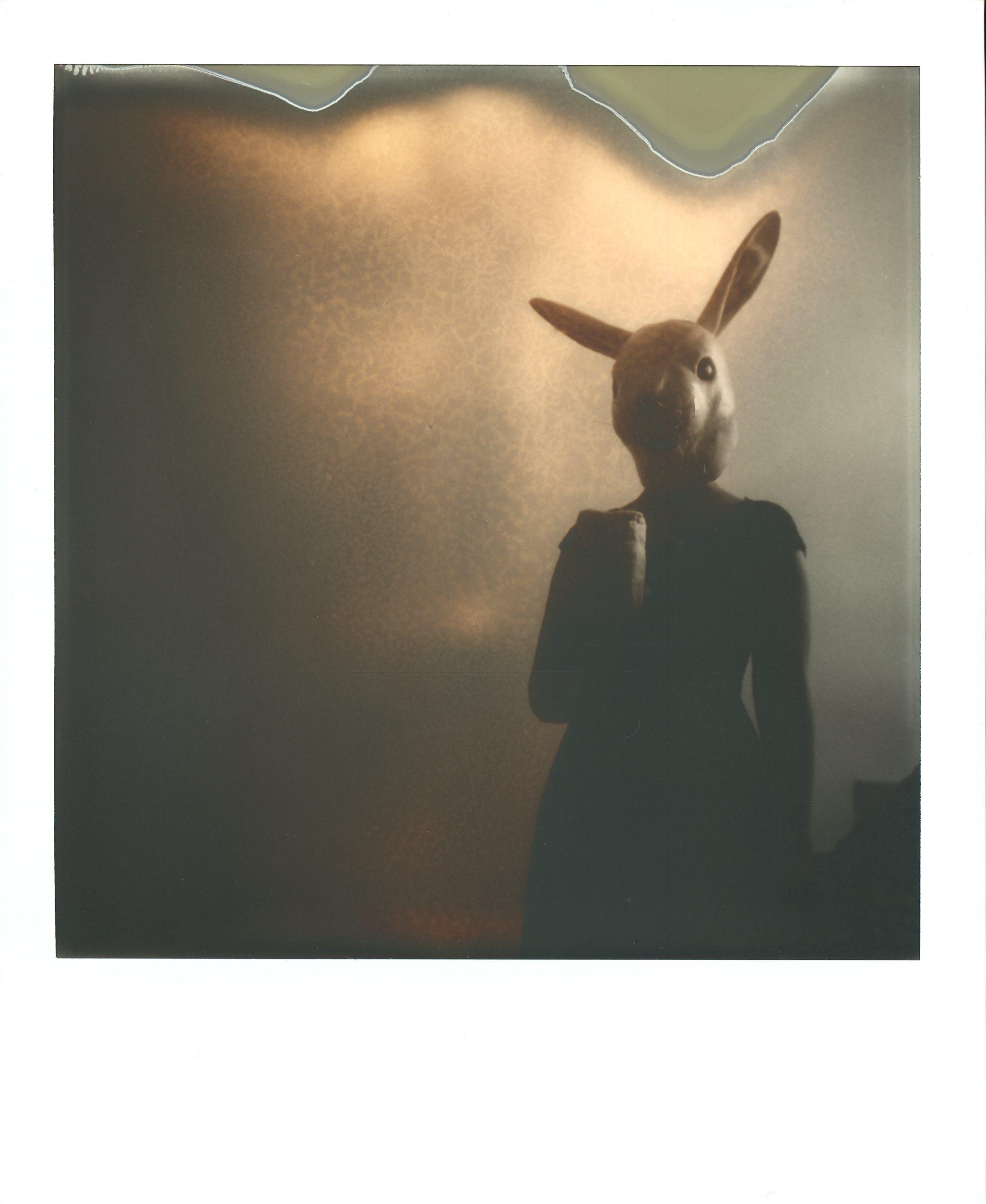DARK-Little rabbit