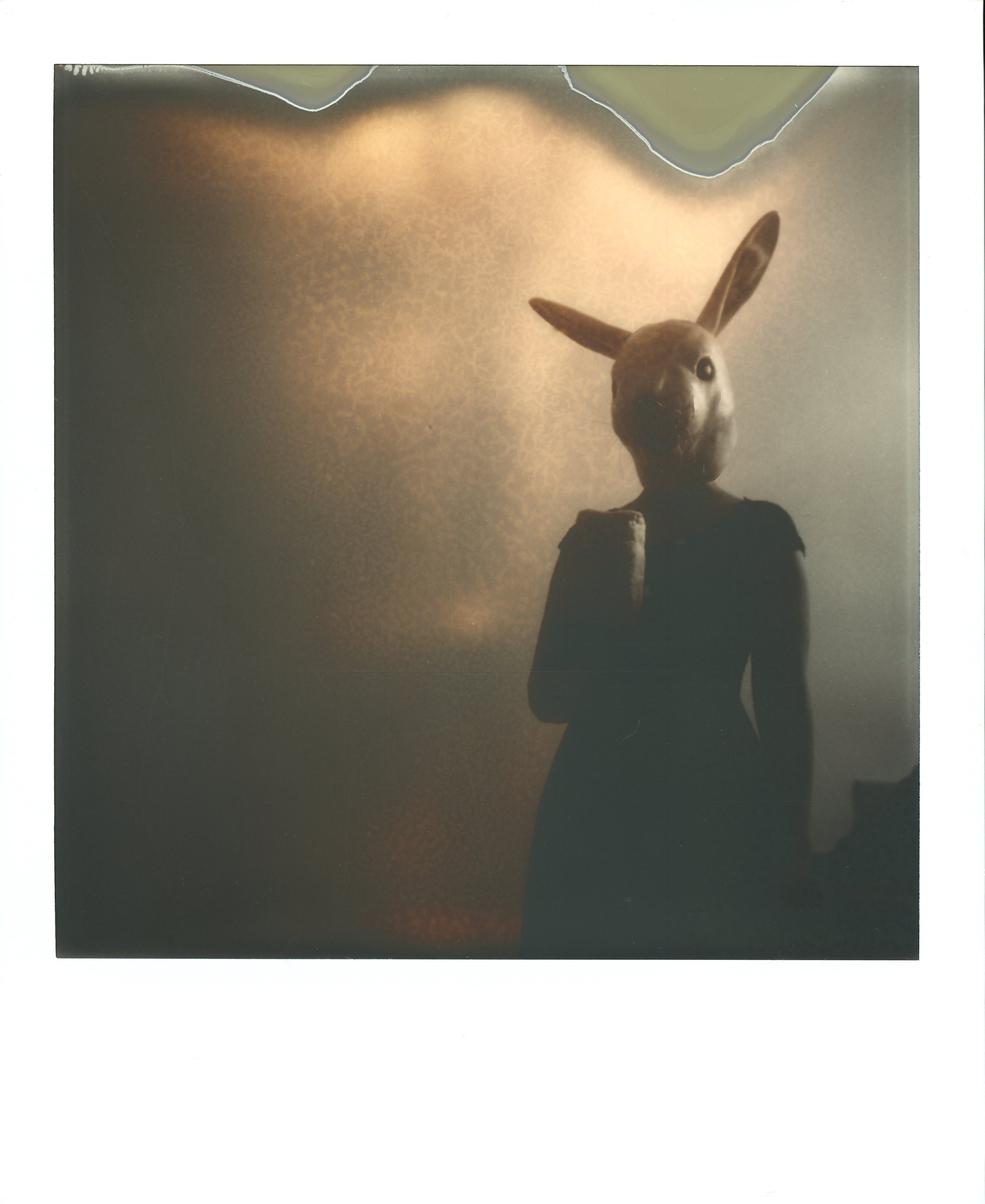 DARK-Little rabbit 1