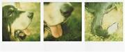 Un cane è un sorriso e una coda che si agita; tutto quello che c'è in mezzo non ha molta importanza. clara Ortega