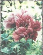 Nel mio giardino