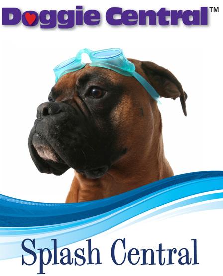 Splash Central dog swimming at Doggie Central