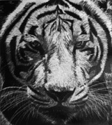 Northampton High School Student Art Show