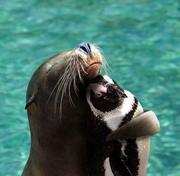 seal hugging penguin
