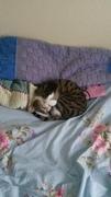 Cute Cat Friday