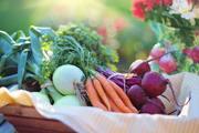 agriculture-basket-beets