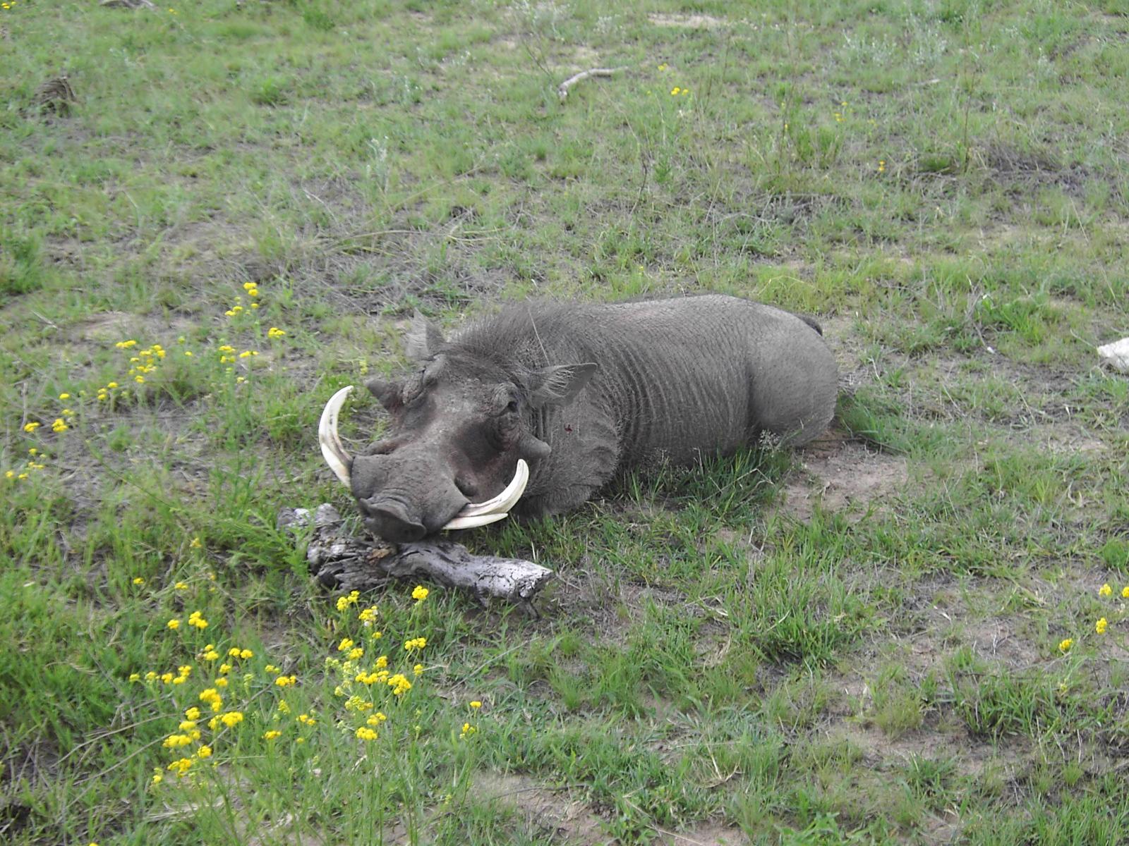 Namibie 2008 022