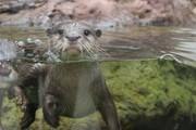 CRIANÇAS: Natal no Fluviário – Água transparente para um Natal diferente