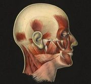 EXPOSIÇÕES: Gabinete de Anatomia