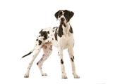EXPOSIÇÕES: 6ª Exposição Canina Nacional do Estoril