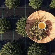 AR LIVRE: Colheita de Ervas Aromáticas Biológicas
