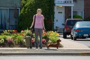 CINEMA: Wiener Dog - Uma Vida de Cão