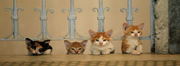 CINEMA: Gatos