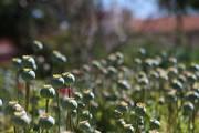 FESTIVAIS: Jardins Abertos