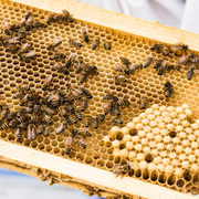 Beekeeping Seminar: Getting Ready for Winter!