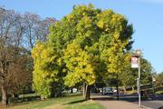 Autumn Tree Walk in Alexandra Park