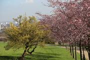 Early Spring Tree Walk