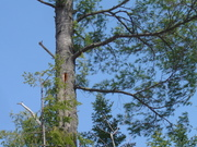 Webinar - Wildlife Habitat and Biodiversity