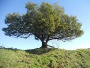 Portes ouvertes de l'arbre des sens; nouveau lieu de bien être