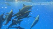 Rencontre et nage avec nos amis dauphins libres