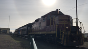 Skunk Christmas Train