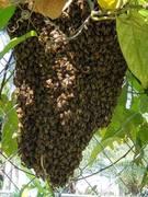 Swarm #1 of the week