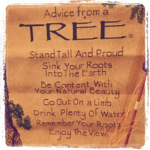 advice from a tree