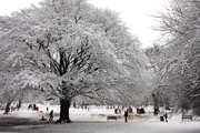 A Packed and Snowy St Andrew's Park by Philip Sims