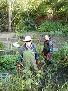 pond clearance 2016 1