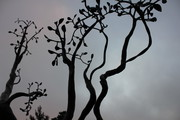 Welded Steel Manzanita Tree Sculpture