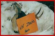 zacks head 4b