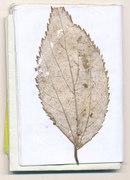 notebook (scan0309) - foglia