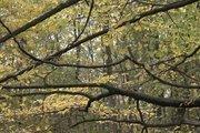 Asian autumn composition