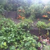 *Building Healthy Soil