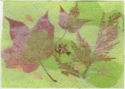 Senders' Choice PC Autumn collage