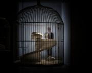 L'anima in gabbia