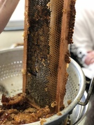 Carols honey scraping