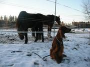Cheri & horses