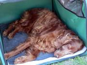 Odin resting