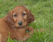 Pup 8 weeks old