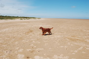 theddlethorpe beach