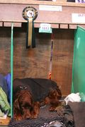 Some photos of Crufts 2011